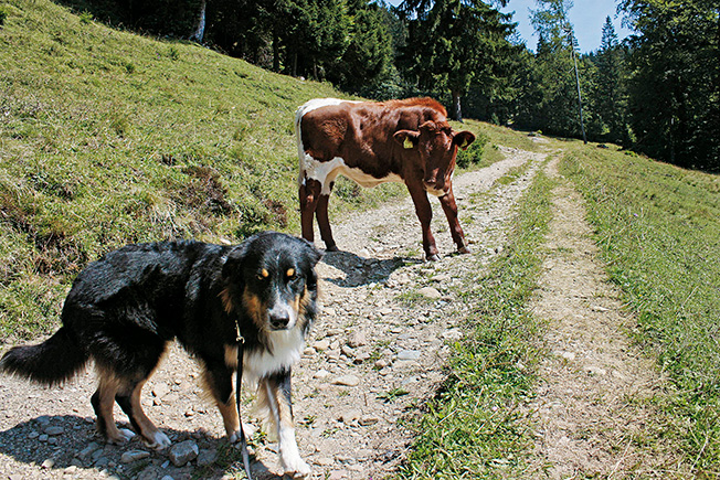 Hunde und Kühe @ Andrea-Obele