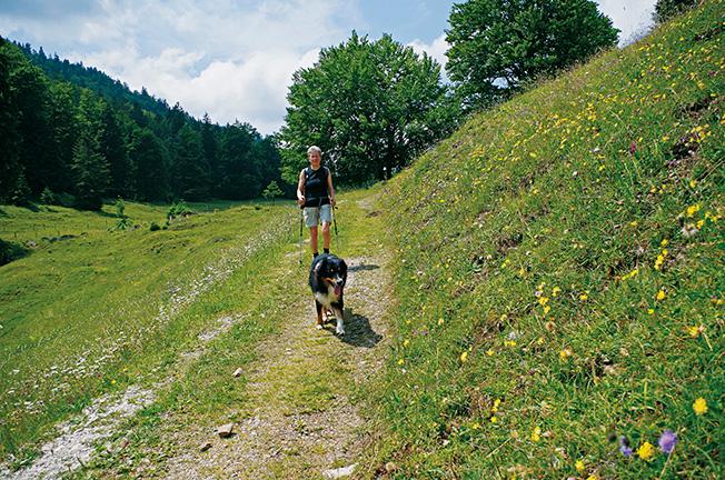 Hunde und Kühe und blühende Almwiesen @ Andrea Obele