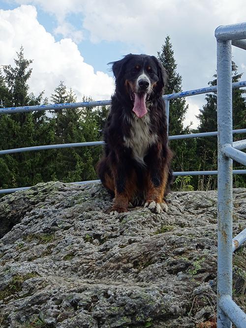 Auf dem Schneckenstein im Vogtland © Franziska Rößner