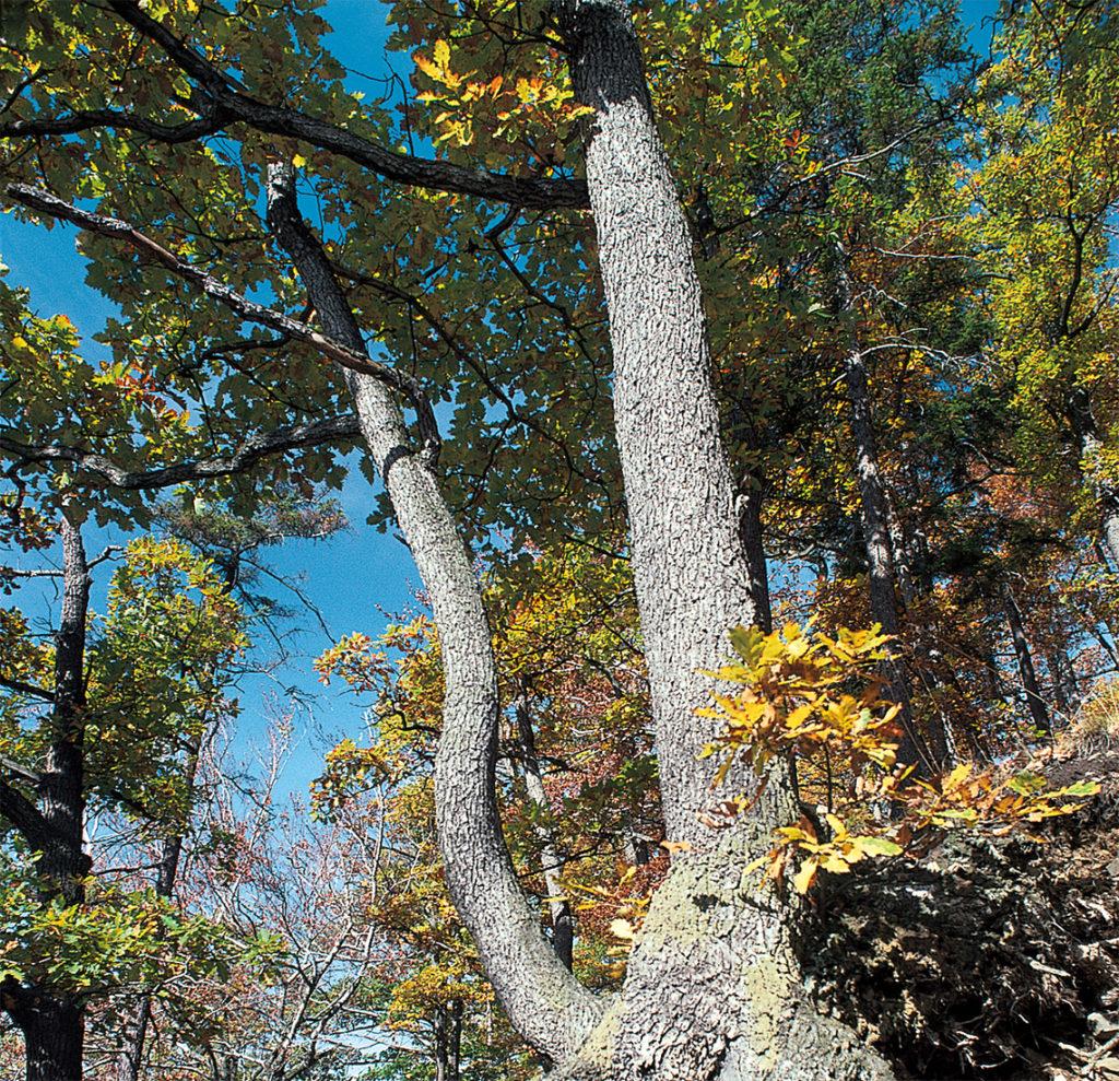 Herbstwanderungen Deutschland Harz